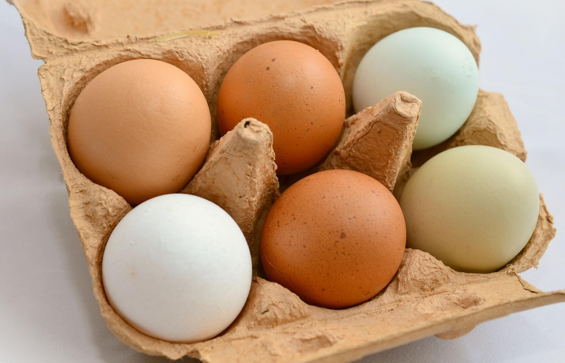 egg-653303_1920